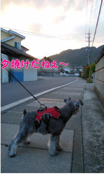 .散歩3jpg.JPG