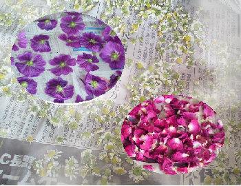 乾燥中のお花