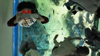 シースルー珊瑚礁水槽