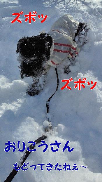 201402091021雪.jpg