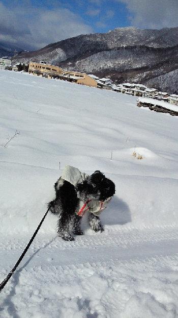 201402091029雪.jpg
