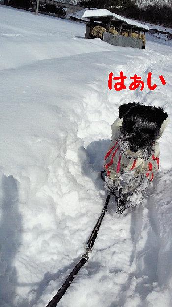 201402091037雪.jpg