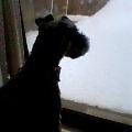 早く雪かき終わらないかな。by散歩待ちおりばー