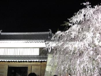 上田城址公園の夜桜