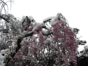 雪、重そう!