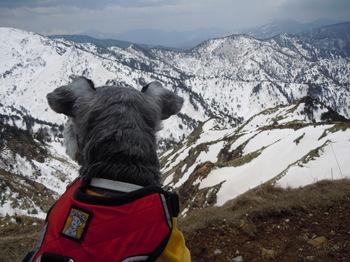 見渡せば、雪山!