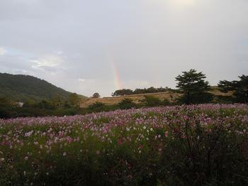虹とコスモス