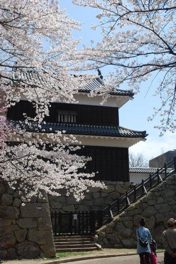 上田城址公園の桜2