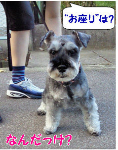 """""""お座り"""".jpg"""