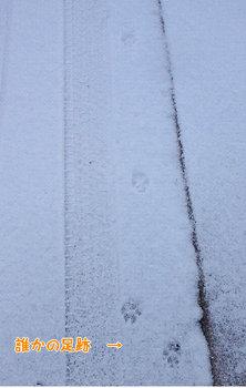 がんばっているワンコの足跡.jpg
