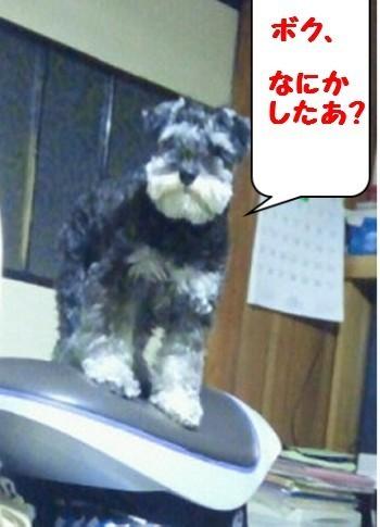 ばすてぃの仕事.jpg