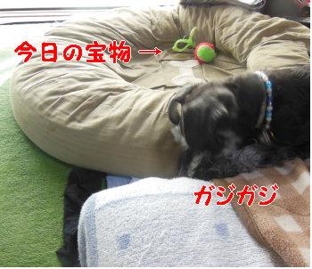 コオリ.jpg