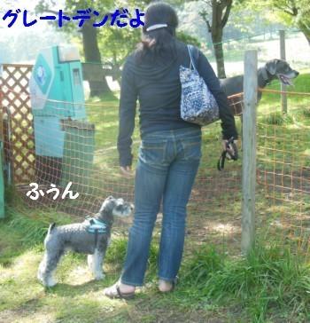 コスモス11.jpg