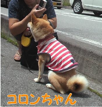 コロンちゃん.jpg