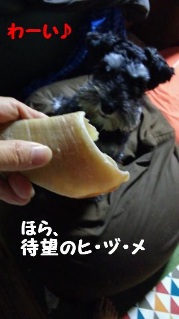 ヒヅメ.jpg