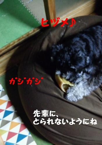 ヒヅメ1.jpg