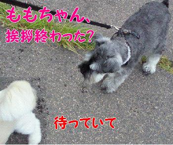 モモちゃん.jpg