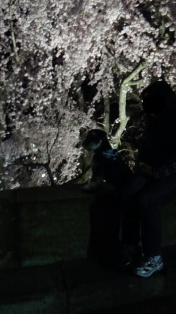 上田城址公園夜桜.jpg