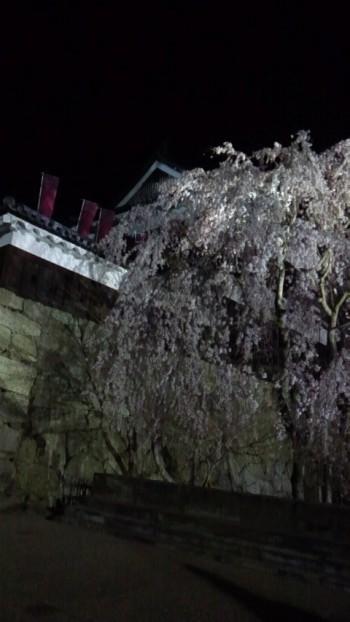 上田城址公園夜桜1.jpg