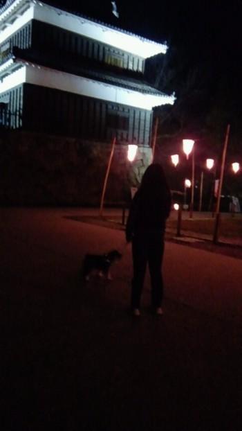 上田城址公園夜桜2.jpg