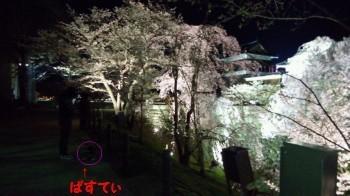 上田城址公園夜桜5.jpg