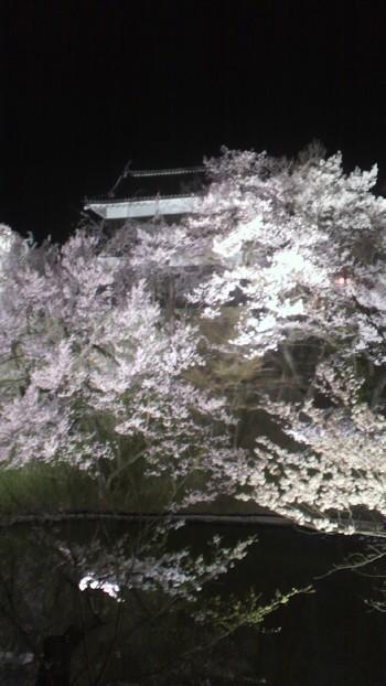 上田城址公園夜桜6.jpg
