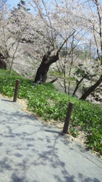 上田城址公園花見1.jpg