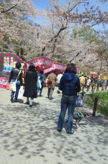 上田城址公園花見2.jpg