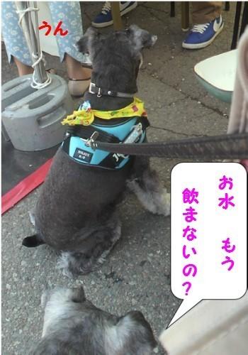 上田城址公園花見9.jpg