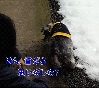久々の雪.jpg