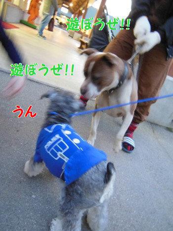 八ヶ岳10.jpg