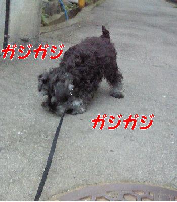 初散歩.jpg