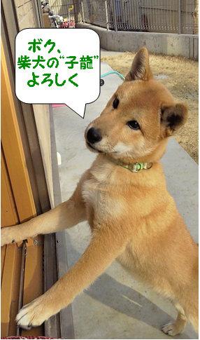 四ヶ月の子龍くん.jpg