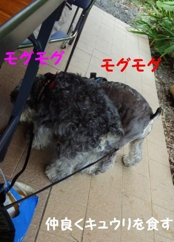 富士見高原3.jpg