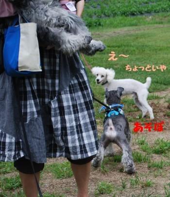 富士見高原4.jpg