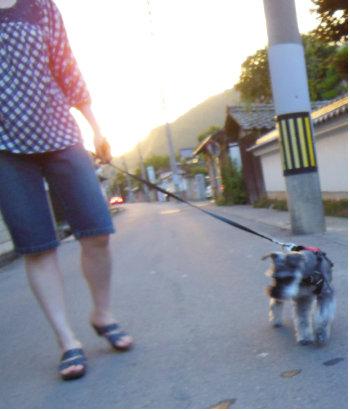 散歩始める頃.jpg
