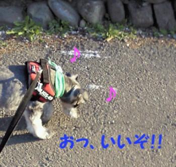 散歩0.jpg