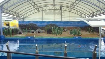松島水族館5.jpg