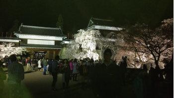 桜237.jpg