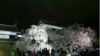 桜238.jpg