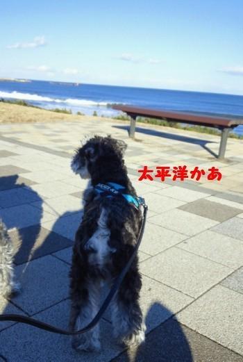 海5.jpg