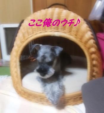 犬つぐら4.jpg