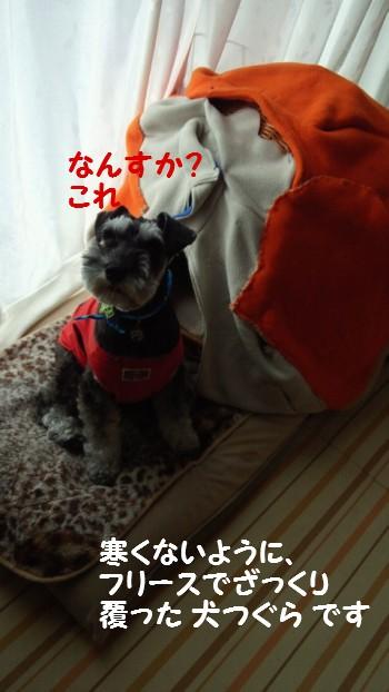 犬つぐら5.jpg