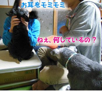 耳の洗浄液1.jpg
