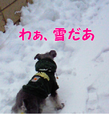 雪だあ.jpg