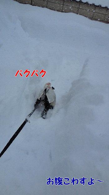 雪0.jpg