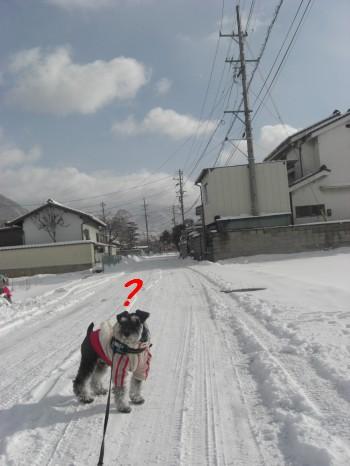 雪11.jpg
