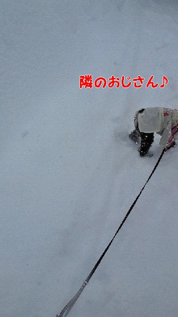 雪2jpg.JPG