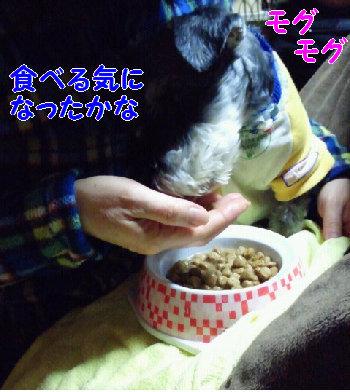 食事5.JPG