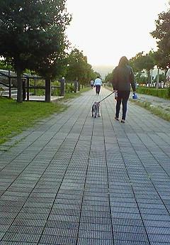 一心に散歩している後姿